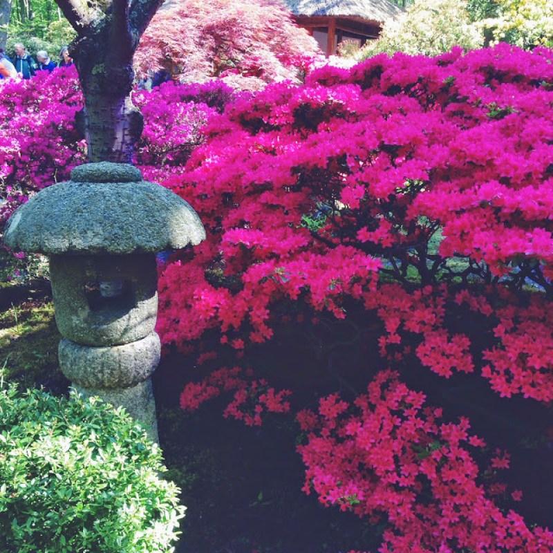 Garden, Clingendael