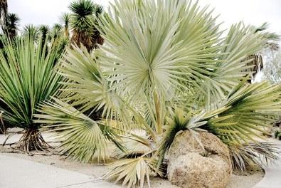 San Diego Balboa Park created the perfect desert backdrop for fashion blogger's bohemian inspired fashion.