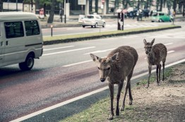 Have You Seen This Japanese Deer City? A Photo Diary of Nara, Osaka and Kyoto 6
