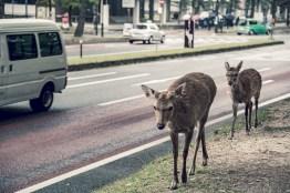 Have You Seen This Japanese Deer City? A Photo Diary of Nara, Osaka and Kyoto 6