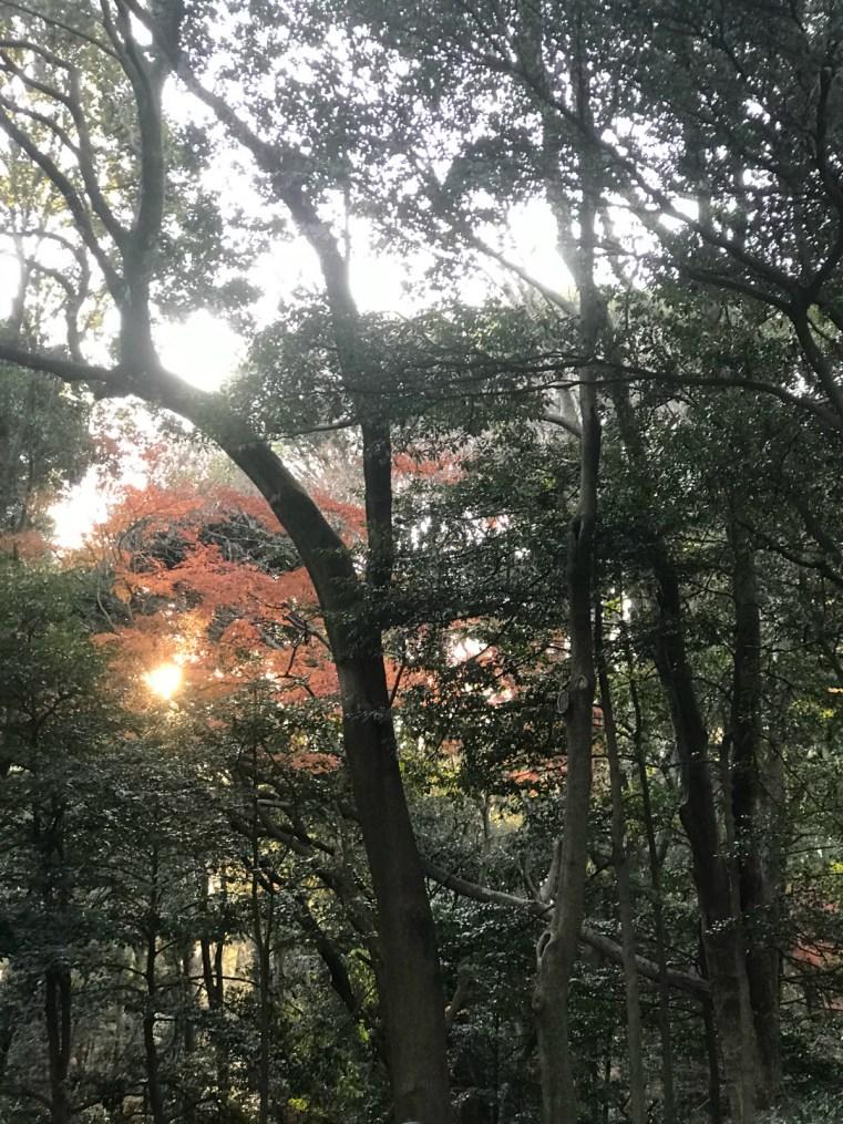 Woodland Meiji shrine, Tokyo, Japan