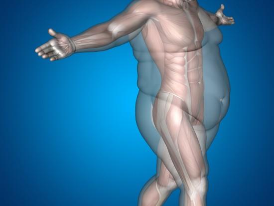 Muskler under underhudsfettet