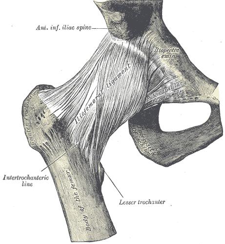 Höftled gray