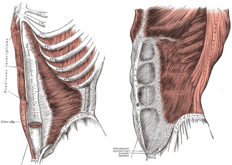 Magmuskler tränade vid marklyft
