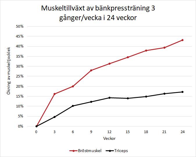 Muskeltillväxt under ett halvår