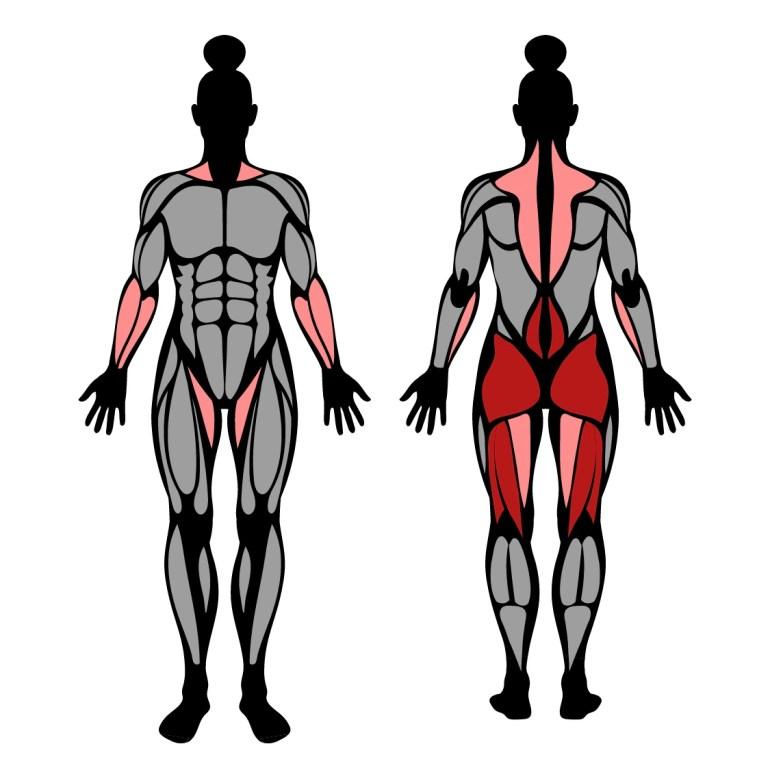 Muskler som tränas av övningen raka marklyft