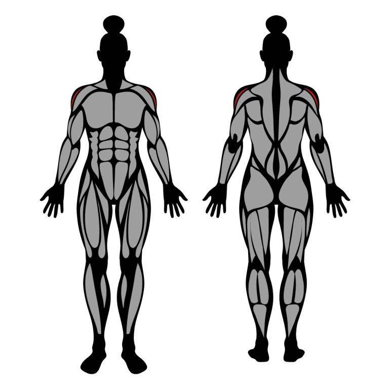 Muskler som tränas av övningen sidolyft med hantlar