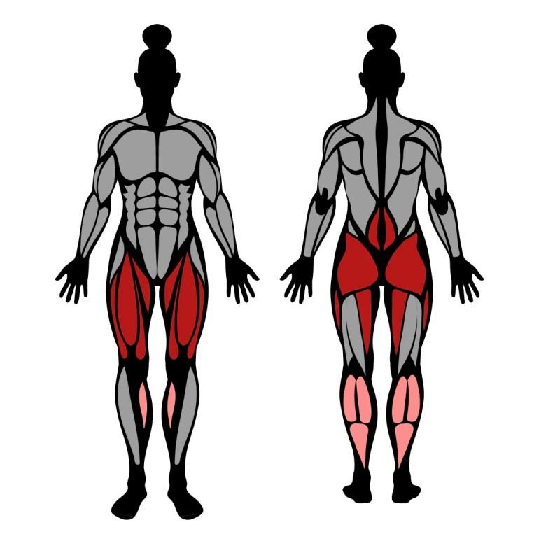 Muskler som tränas i övningen frontböj