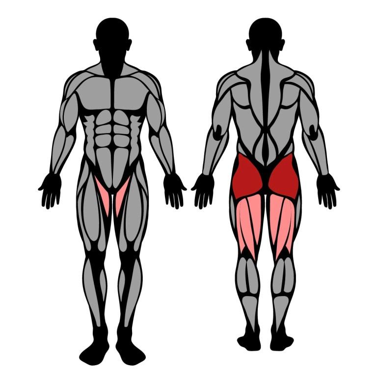 Muskler som tränas av Hip thrust i maskin