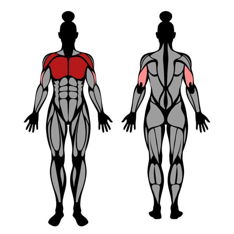 Muskler som tränas av bänkpress i smithmaskin