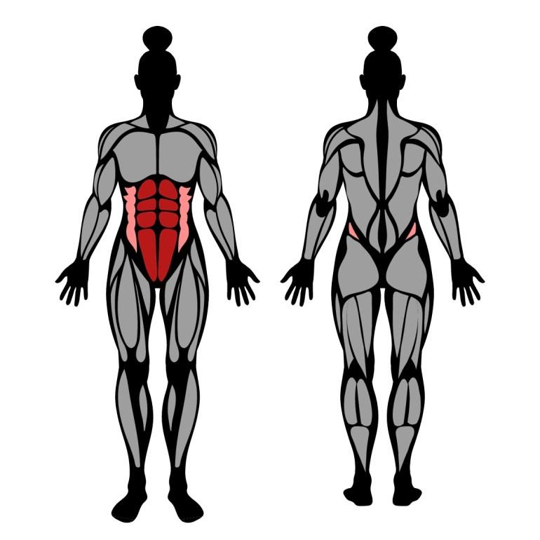 Muskler som tränas av crunches