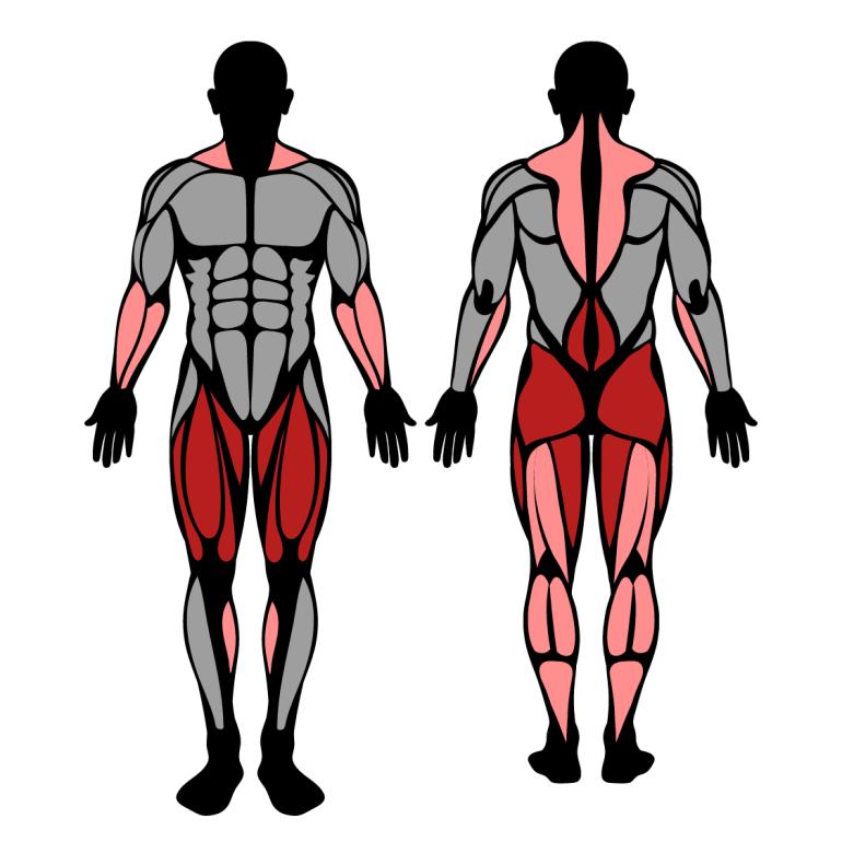 Muskler som tränas av frivändning