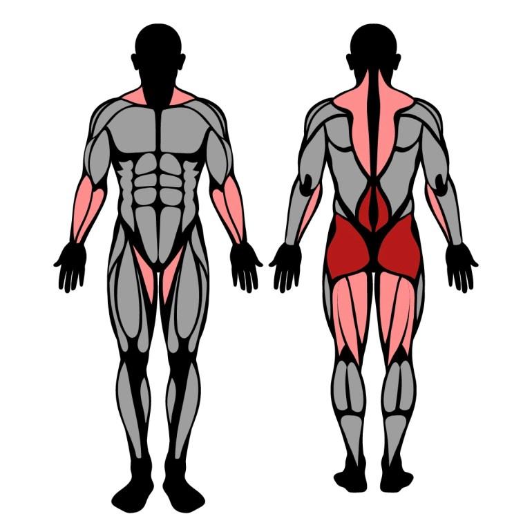 Muskler som tränas av hängande styrkevändning