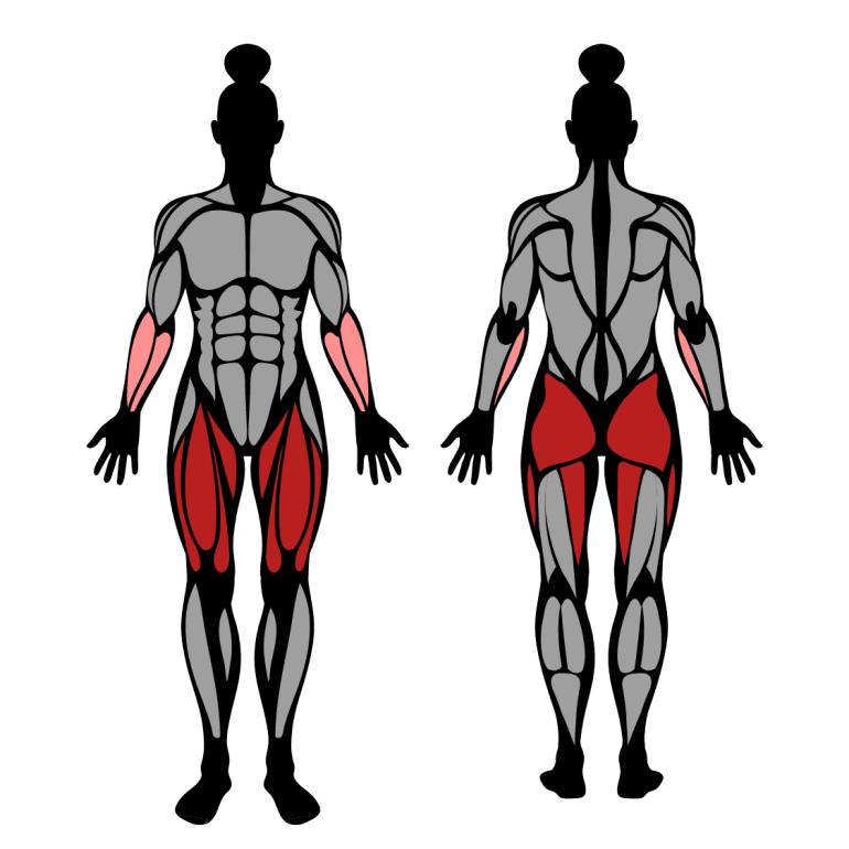 Muskler som tränas av utfall med hantlar