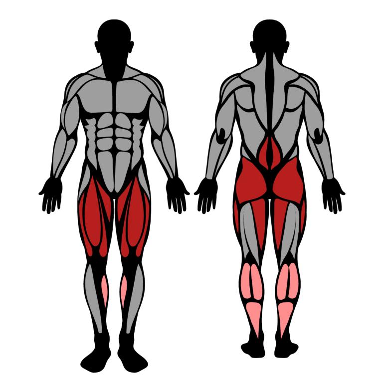 Muskler som tränas av övningen safety bar knäböj