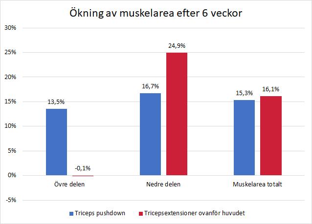 Ökning av muskelarea i triceps långa huvud