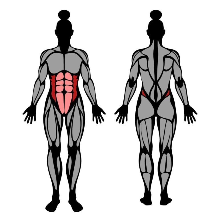 Muskler som tränas av sned sit-up