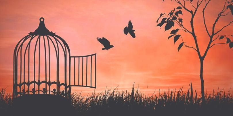 Liberdade dos pássaros