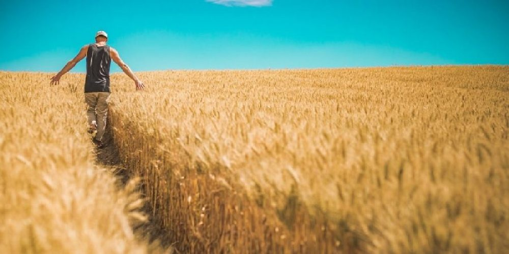 Homem caminhando na plantação de trigo, ilustrando os 4 hábitos milionários que farão qualquer pessoa enriquecer.
