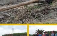PT AA Hancurkan Kearifan Lokal, 2 Hektar Hutan Kepung Sialang Dibabat