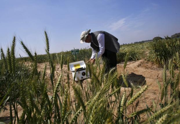 Sahoo a senior scientist at IARI prepares to install a high resolution remote sensor used for crop mapping in a wheat field at IARI in New Delhi