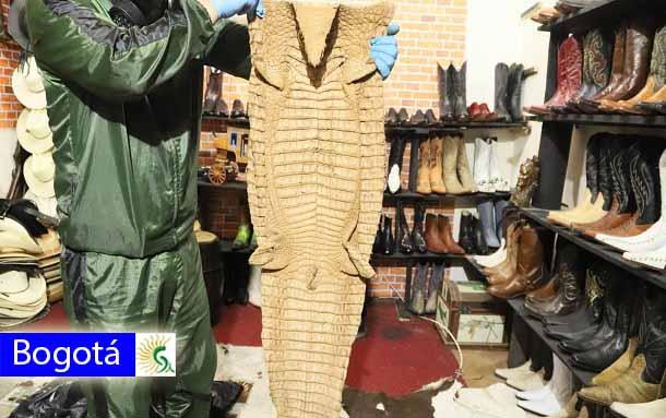 Cerca de 400 artículos elaborados con animales silvestres fueron incautados en establecimiento del sur de Bogotá