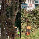 Desde el concejo piden suspender las talas de árboles
