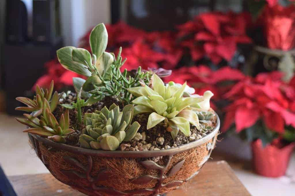 10 Best Succulents and Cacti for Succulent Arrangements