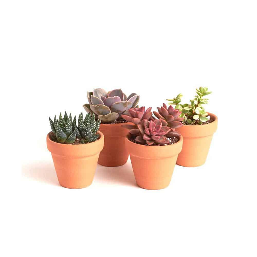 Terracotta vs. Plastic Pots