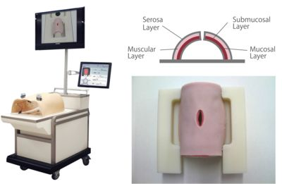 Fig. 1 Appearance of the new computerized system for objective assessment of the suture ligature method used in the laparoscopic intestinal suturing model (Lap-SAS IS). The artificial intestine model consists of four layers: mucosal, submucosal, muscular, and serosal