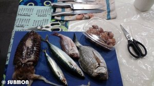 peixos i material a punt