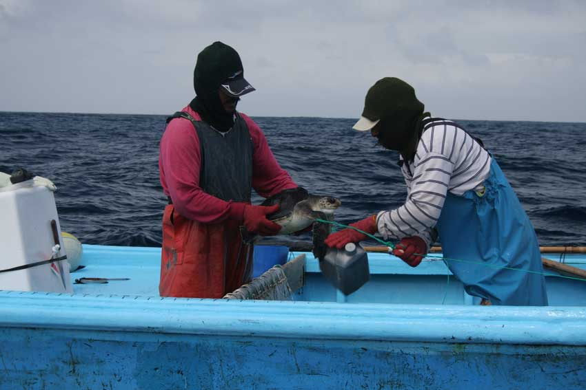 Training fishermen on the best techniques to handle and release incidentally captured sea turtles.