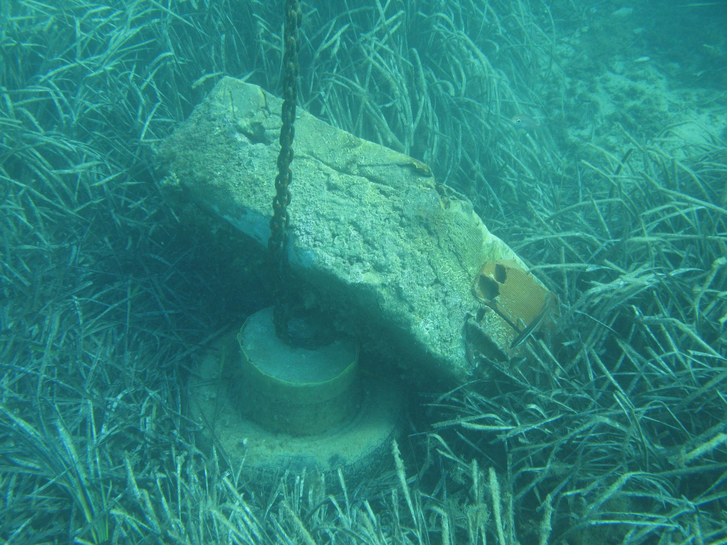 Restoration of Neptune seagrass meadows affected by mooring systems
