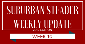 2017 Suburban Steader Update – Week 10