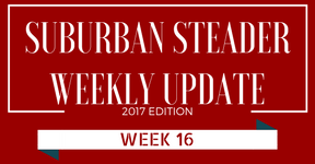 2017 Suburban Steader Update – Week 16