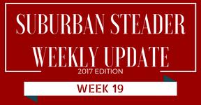 2017 Suburban Steader Update – Week 19