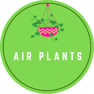 Air Plants (Tillandsia)