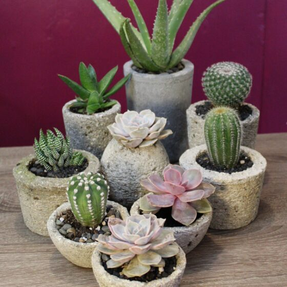 family of hypertufa pots with succulents and cactus