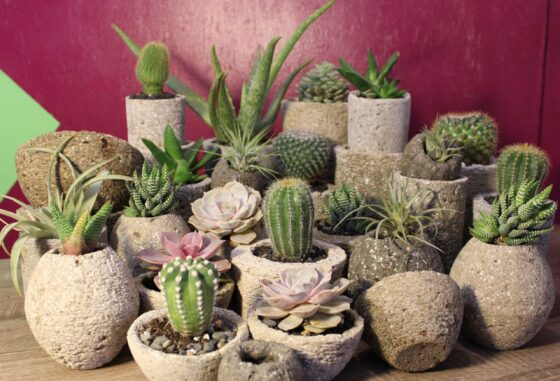 family of hypertufa pots