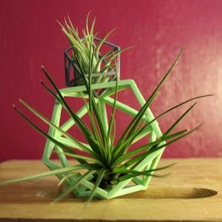 3d tillandsia holder with plants