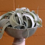Ann Hanlin white dot green ceramic plant bowl