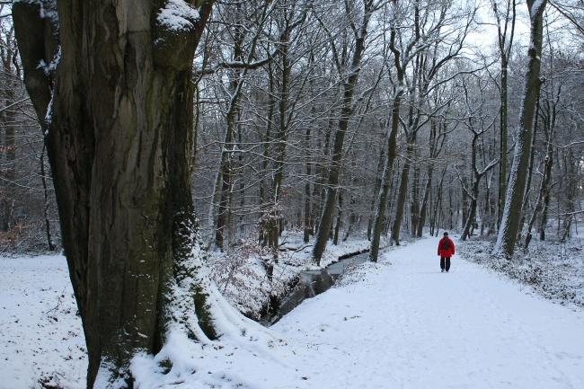 冬天樹林雪景圖片_雪景圖片_素材ABC