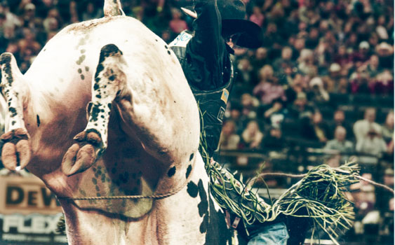 The Baddest Bull Ride Has a Secret to Success: Always Pick the Baddest Bull