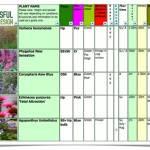 Garden Plant Selection – September Stunners