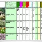 Garden Plant Selection – Nice in November