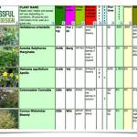 Plant Selection – Jolly in January