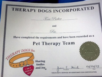 Rio's Therapy Dog Certificate!