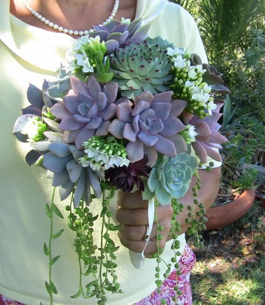 Jeannine And Joses Bridal Suite Urban Succulents