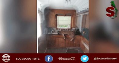 Puma inconsciente dentro de una casa