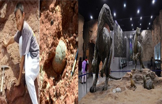 10 year old found dinosaurs egg
